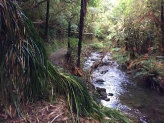 Korokoro stream