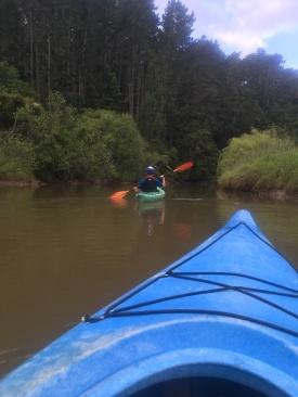 Kayaking from Puhoi to Wenderholm