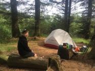 Hmmm pine forest camp